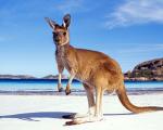 Thông tin về visa Úc